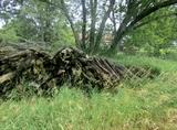 Cedar Rails!