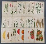 Group of antique Plant Lithographs