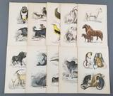Group of antique animal prints/etchings