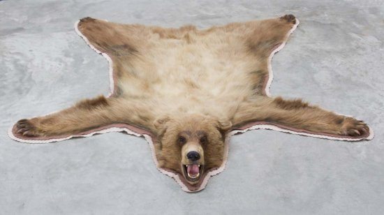 Quality mounted Brown Bear Rug