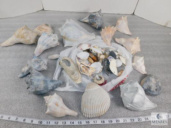 Lot of Assorted Shells, Conch Shells, Sand Dollars, Ceriths, Murex