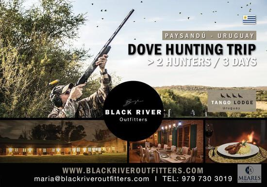 The Largest Dove Roost in the World! Dove Hunting in Uruguay