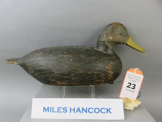 Miles Hancock Black Duck