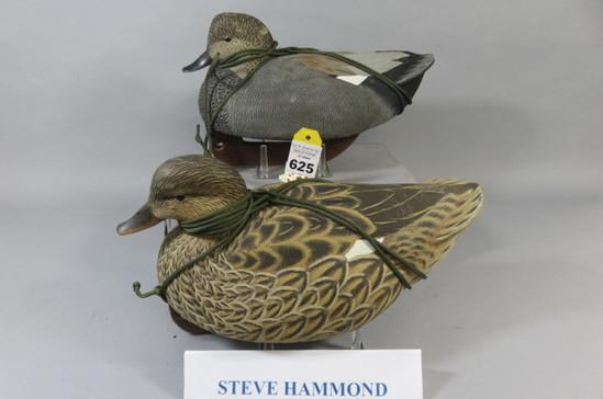 Steve Hammond Gadwalls