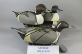 Gary Williams Pintails