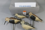 Cigar Daisey Shorebirds