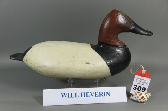 Canvasback by Will Heverin