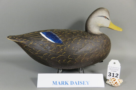 Black Duck by Mark Daisey