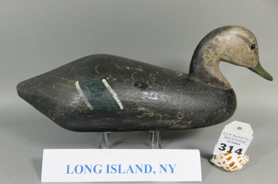 Black Duck from Long Island