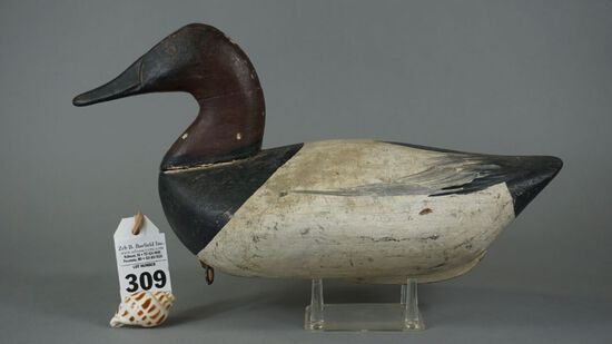 Upper Bay Canvasback