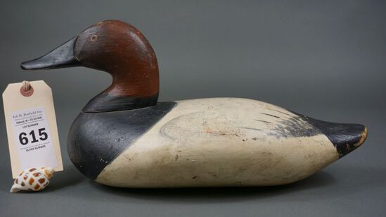 Canvasback from HdG