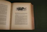 """1874 HC """"Wood's Natural History"""" book;"""