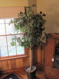6' Silk Ficus Tree in Basket Planter