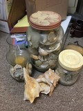 Lot - Seashell Motif Glass Jar, 2 Seashells, Seashell in Jar