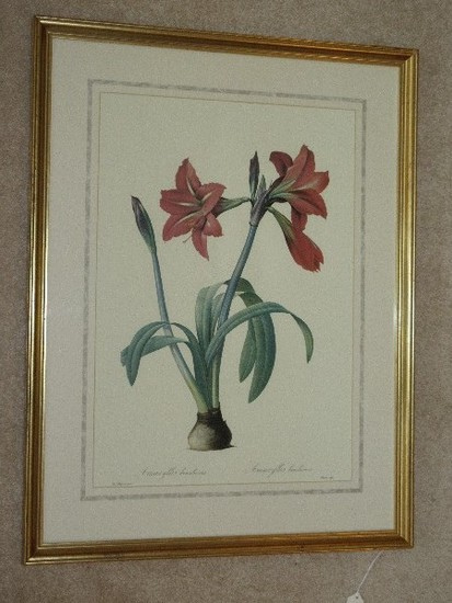 Botanical Amaryllis Flower Bulb Print in Antiqued Gilted Patina Frame