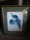 Pavo Muticus Peacock Print in Ornate Gilted/Black Wooden Frame/Matt