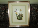 Anthracothorax Prevostii Hummingbird Picture Print in Gilted Wood Frame/Matt