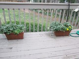 Pair - Red Clay Curled/Floral Pattern Planters w/ Flowers