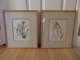Pair - Botanical Orchids in Bloom Hand Colored Engravings in Wooden Frames/Gray Mats