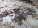 4 Metal Whimsical Garden Frog Figures Weathered Patina