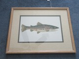 Spotted Seatrout Original Water Color Artist Signed in White Wash Frame/Matt