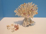 Decorative Coral Piece Shell Butterflies on Oyster Shell Base