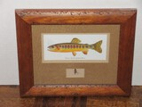 Volcano Creek Golden Trout Illustration Art Print w/ Fly Fishing Lure