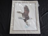 Flying Eagle Picture Print by Huge Hurtle
