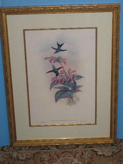 Hummingbird & Botanical Illustration Fine Art Print Attributed to J.Gould & H.C. Richter