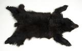 Black Bear Skin Trophy Rug