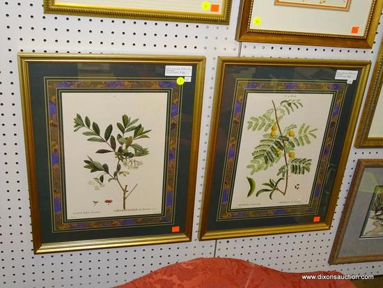 (WALL 1) PAIR OF FRAMED P.J. REDOUTE BOTANICAL PRINTS; THIS LOT CONTAINS TWO BOTANICAL PRINTS BY