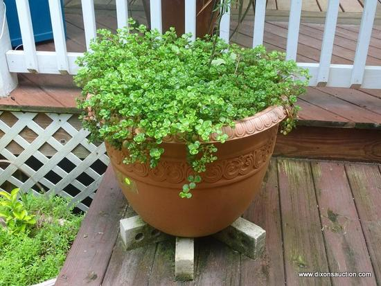 (OUT) PLANTER WITH PLANT; LARGE VINYL ORNAMENTAL PLANTER WITH PLANT- 24 IN DIA. X 19 IN H
