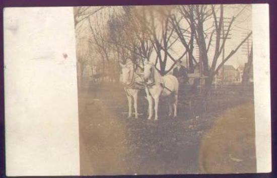 1910 PHOTO PAIR OF WHITE HORSES PULLING MAN IN BUGGY Interesting real photo postcard showing 2