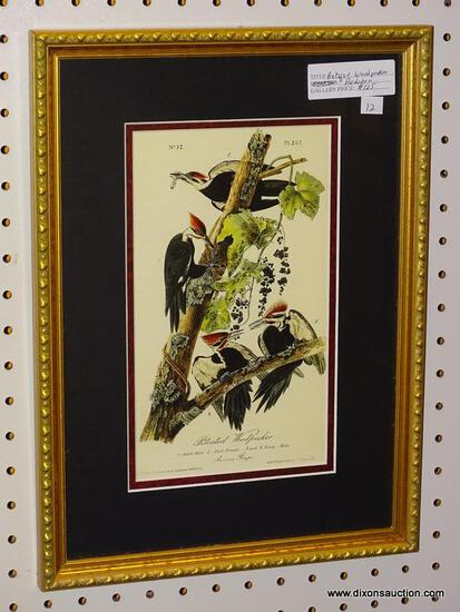 """PILEATED WOODPECKER"" JOHN J. AUDUBON PRINT; SHOWS THE MALE PILEATED WOODPECKER, THE FEMALE"