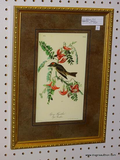"""PIPIRY FLYCATCHER"" JOHN J. AUDUBON PRINT; SHOWS THE BIRD SITTING UPON A BLOOMING FLOWERS BRANCH."