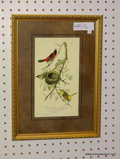 """ORCHARD ORIOLE OR HANG-NEST"" JOHN J. AUDUBON PRINT; SHOWS THE MALE, YOUNG MALE, AND FEMALE BIRD"