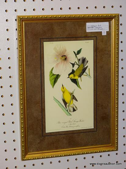 """BLUE-WINGED YELLOW SWAMP WARBLER"" JOHN J. AUDUBON PRINT; SHOWS THE MALE AND FEMALE BIRD SITTING ON"