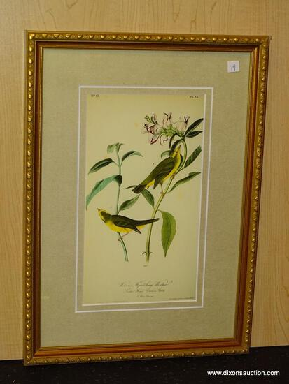 "ANTIQUE BIRD BY JOHN AUDUBON. MEASURES 10"" X 14 1/2""."