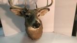 Taxidermy Deer.
