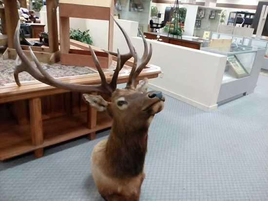 Taxedermy Elk Head