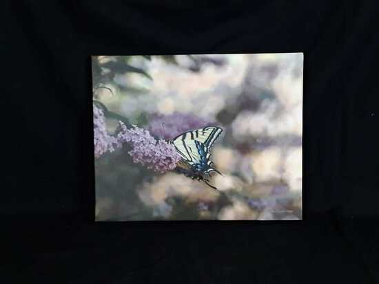Butterfly Print by Mollie Plummer on Canvas