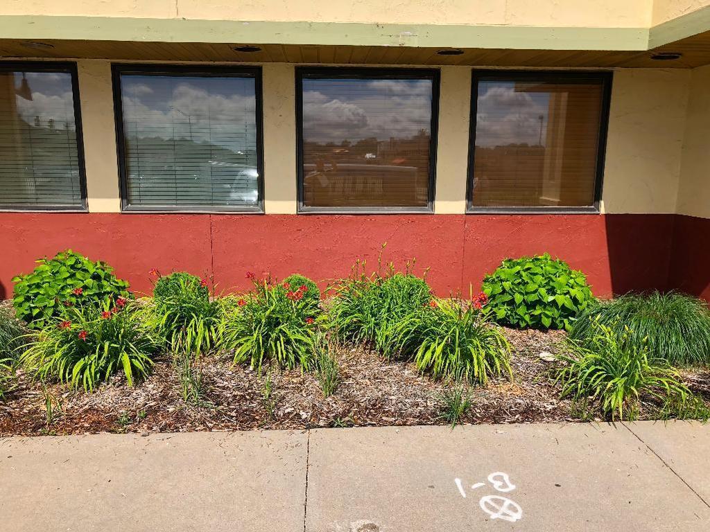 Outdoor Plants - Buyer to remove