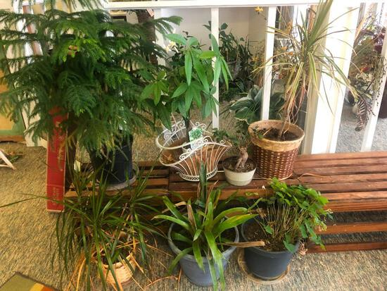 (7) Seven Assorted Plants in Pots- All in Good Condition See Photos for Details