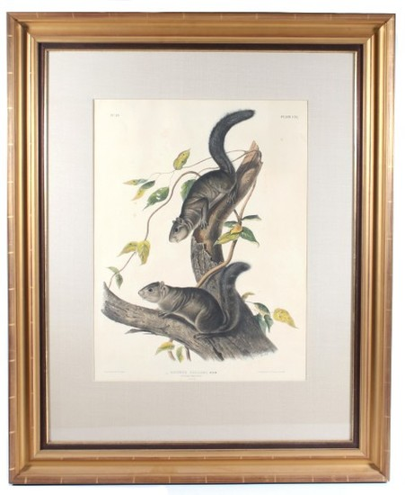 1847 John Audubon Large Squirrel Etching ORIGINAL