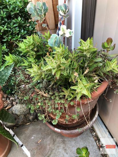 "Yard & Garden - 2 terra cotta planter pots 12""hx15""w with succulents and 7""hx8""w"