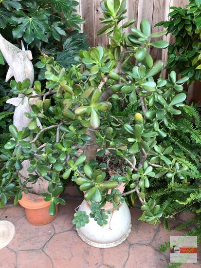 """Yard & Garden - 2 planter pots, plastic 12.5""""h (36""""h) w/succulents & white decor pot 10""""hx15""""w"""
