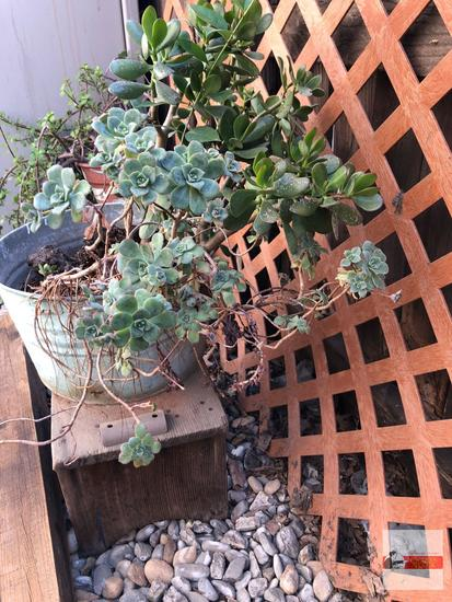 Yard & Garden - Galvanized bucket with succulents and wooden bench