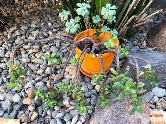 Yard & Garden - Orange decor planter pot w/succulents