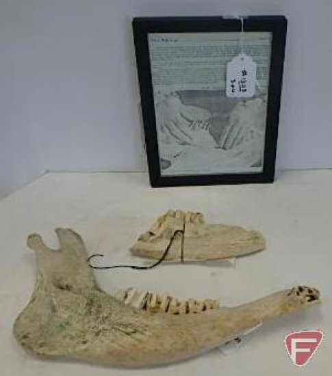 Slikjikjakje, jaw bone of a cow, and article on use, All 3 pieces