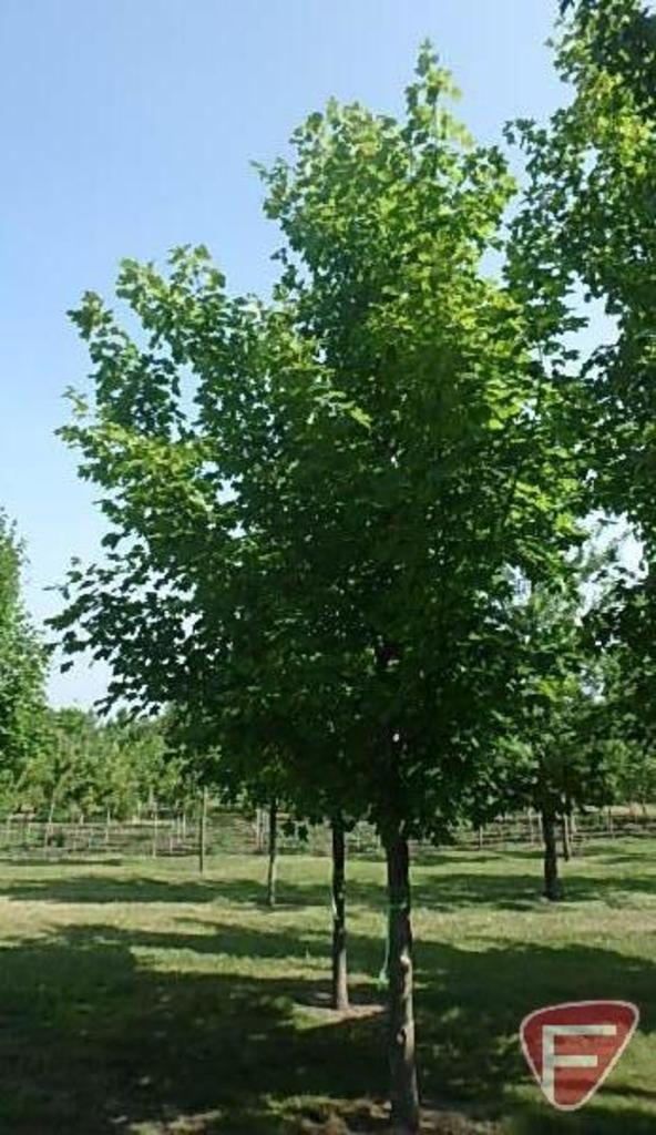 Mahowald Tree Farm Fall 2018 Inventory Reduction